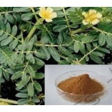 Tribulus Terrestris Extract - 60%